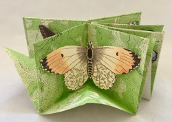 Kit Davey - Butterfly Box-fold Book