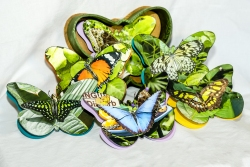 Lorraine Crowder-Butterflies 2016