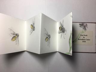 Bernadette-Castor-Bees