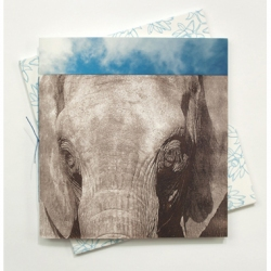 Nanette Wylde - Remembering Elephants